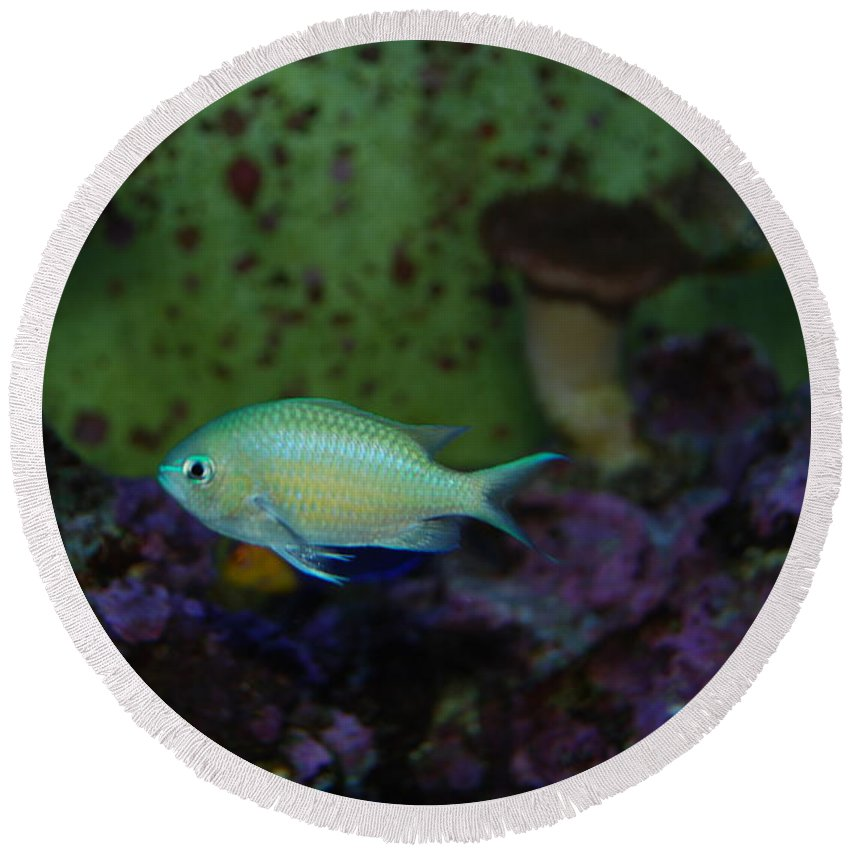 Taken Through Side Of Aquarium Round Beach Towel featuring the photograph Tropical Fish And Coral by Robert Floyd