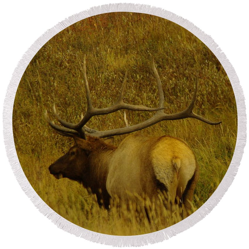 Elk Round Beach Towel featuring the photograph A Big Bull Elk by Jeff Swan