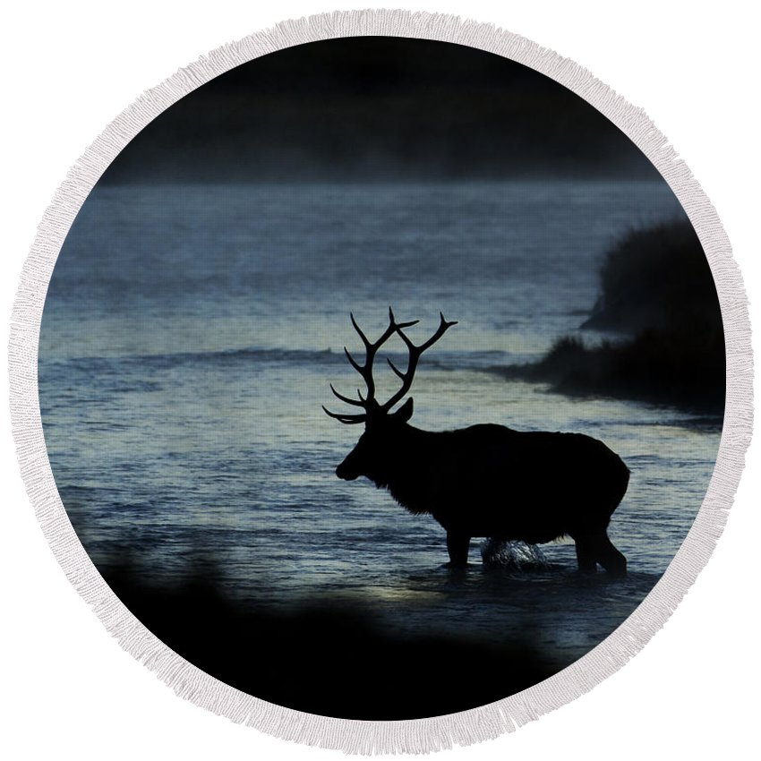 Elk Round Beach Towel featuring the photograph A Bull Elk Crosses The Madison In The Early Morning by Gary Langley