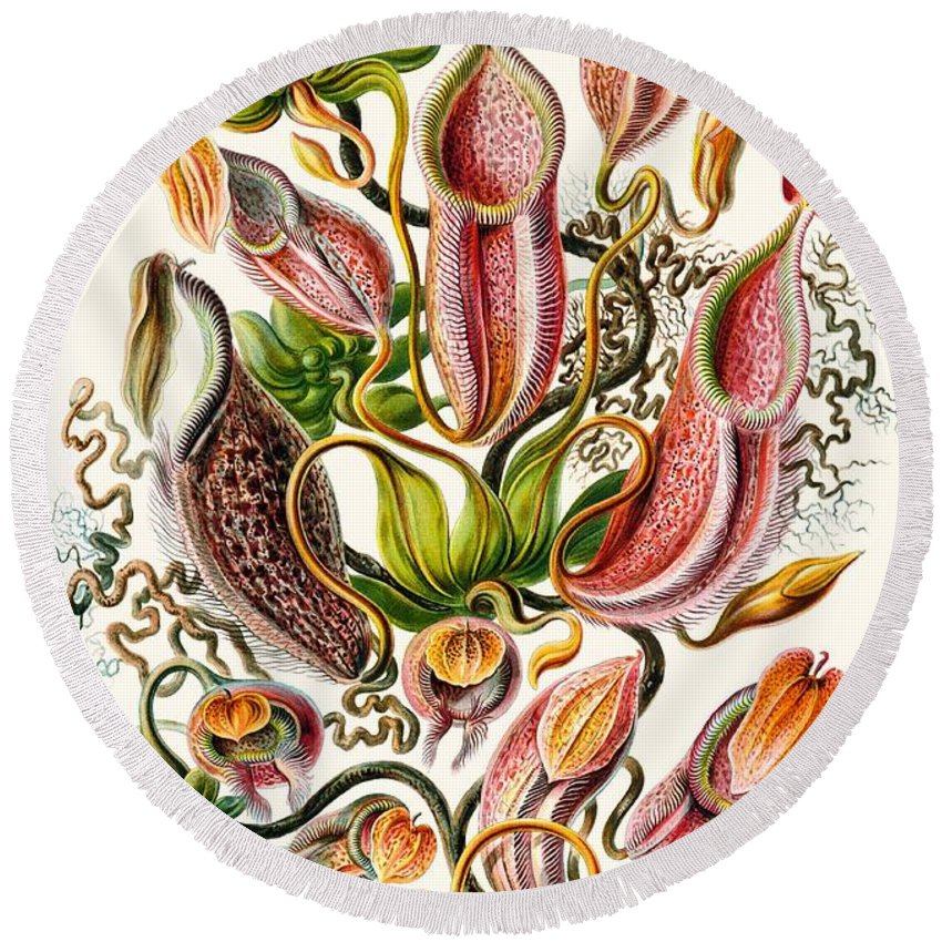 Vertical Round Beach Towel featuring the drawing A Collection Of Nepenthaceae by Ernst Haeckel