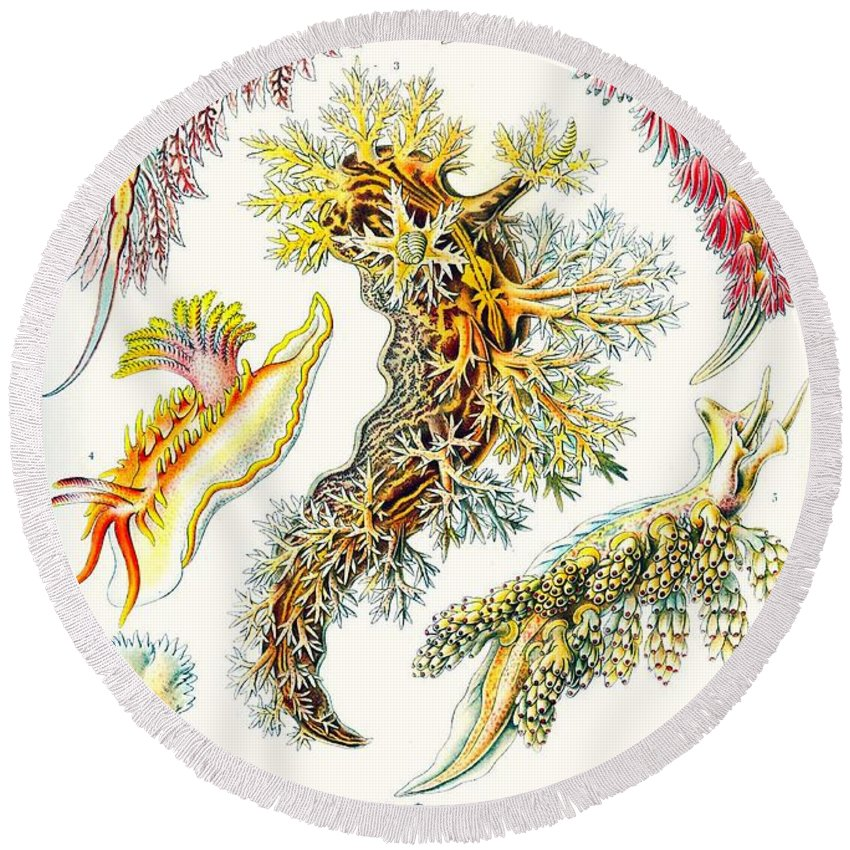 Vertical Round Beach Towel featuring the drawing A Collection Of Nudibranchia by Ernst Haeckel