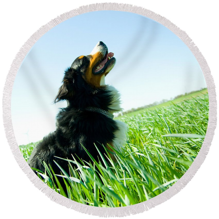 Adorable Round Beach Towel featuring the photograph A Cute Dog On The Field by Michal Bednarek
