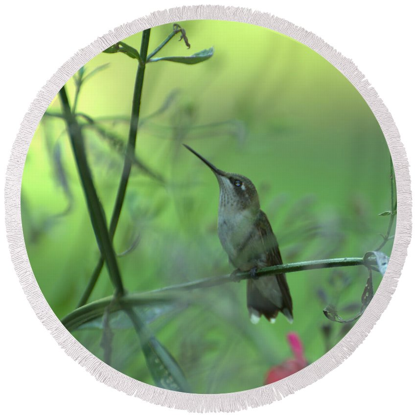 Bird Round Beach Towel featuring the photograph A Dreamer by Donna Brown