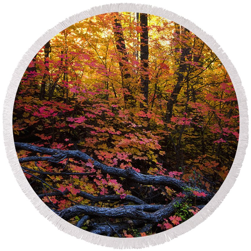 Fall Colors Round Beach Towel featuring the photograph A Fall Forest by Saija Lehtonen