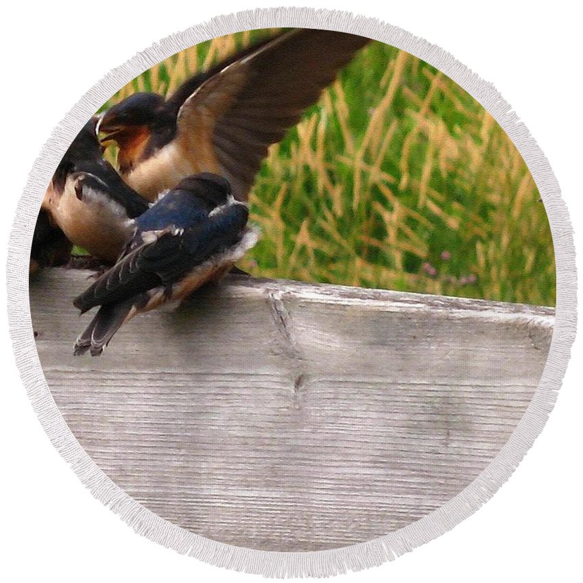 Baby Round Beach Towel featuring the painting A Fourth Baby Barn Swallow Wants In On Lunch by J McCombie
