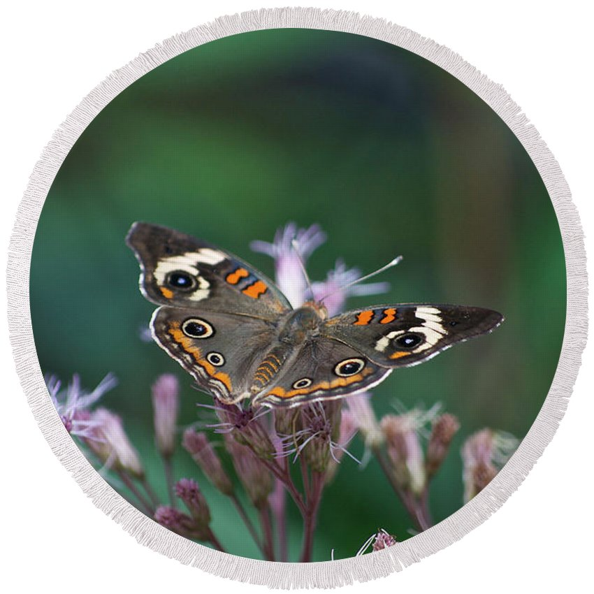 Il Round Beach Towel featuring the photograph A Friendly Butterfly Smile by Thomas Woolworth