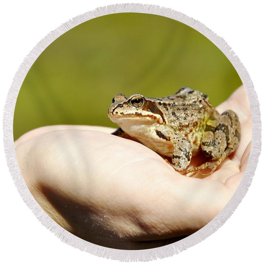 Hand Round Beach Towel featuring the photograph A Frog In The Hand by HHelene