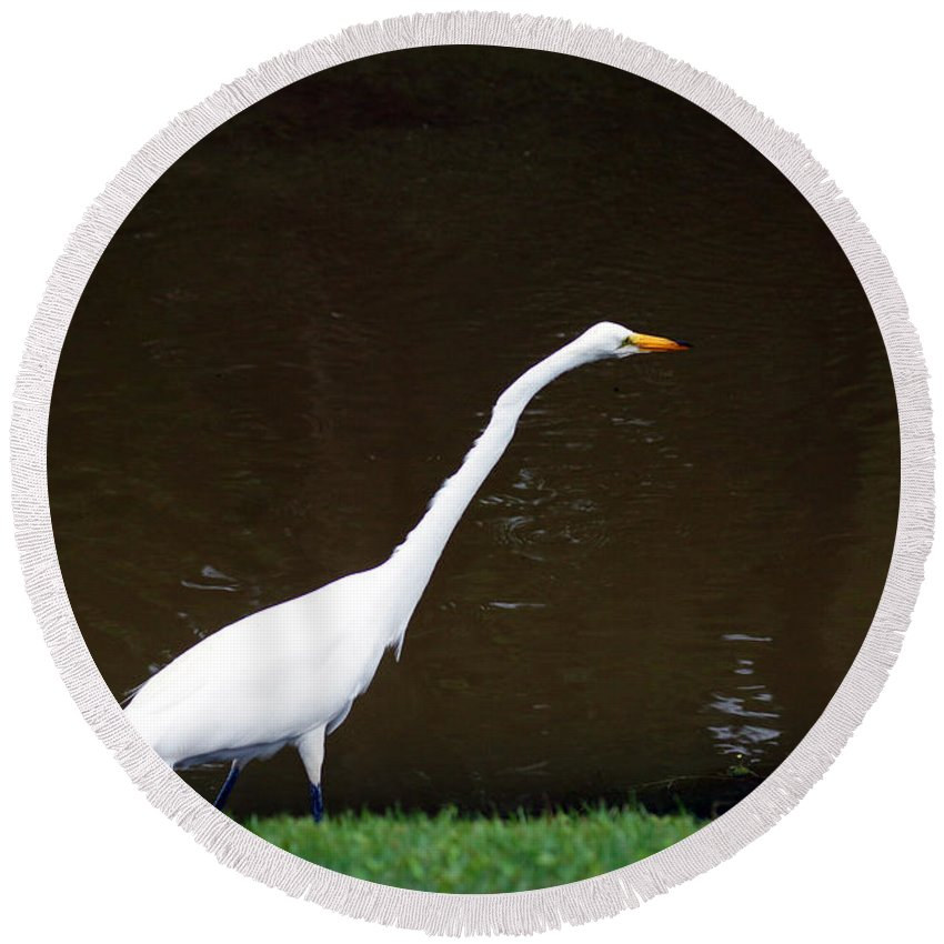 The Great Egret Round Beach Towel featuring the photograph A Great Egret On Hilton Head Island by Kim Pate