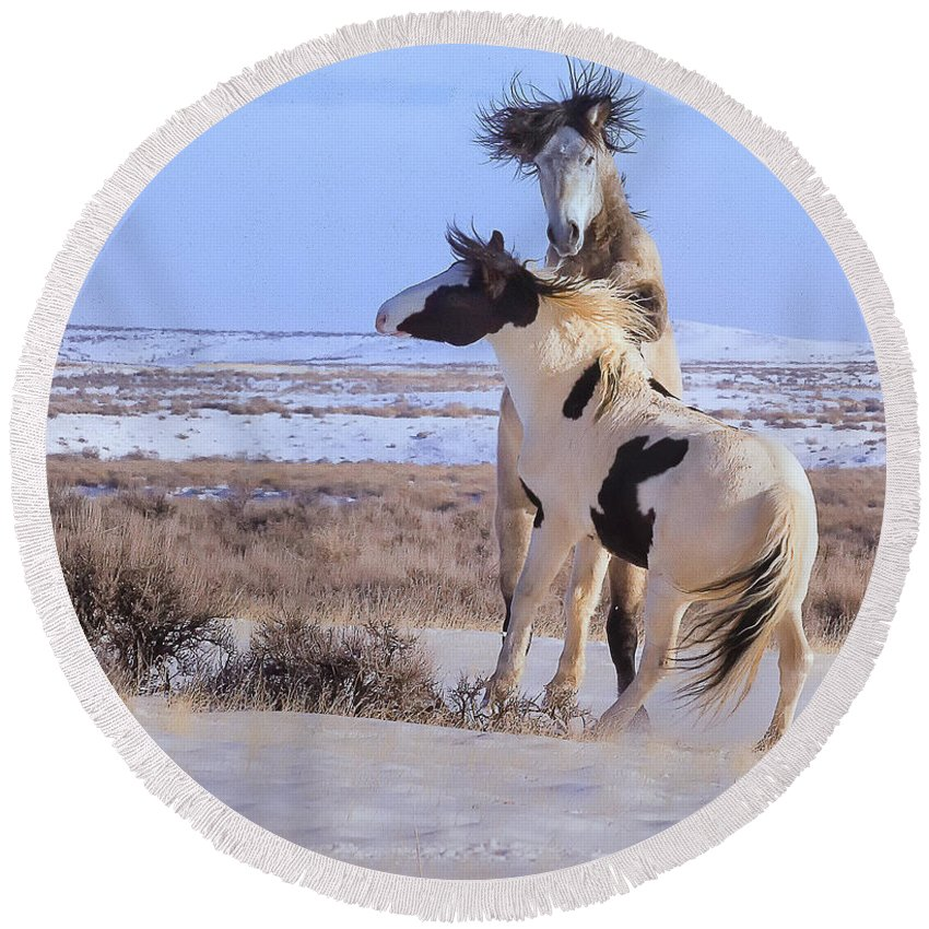 Mccullough Peaks Wild Mustang Round Beach Towel featuring the photograph A Hair Raising Experience by Elaine Haberland