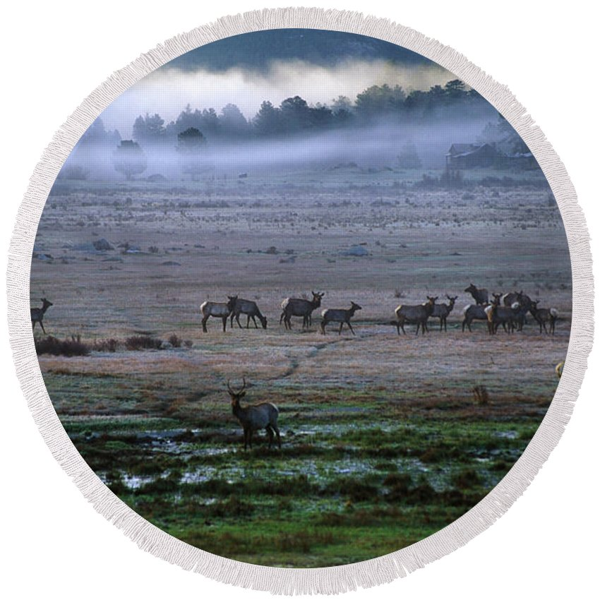 Animal Round Beach Towel featuring the photograph A Heard Of Elk Graze In A Misty Meadow by Keith Ladzinski