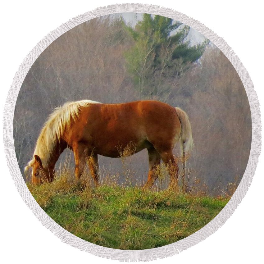 Horse Round Beach Towel featuring the photograph A November Horse by MTBobbins Photography