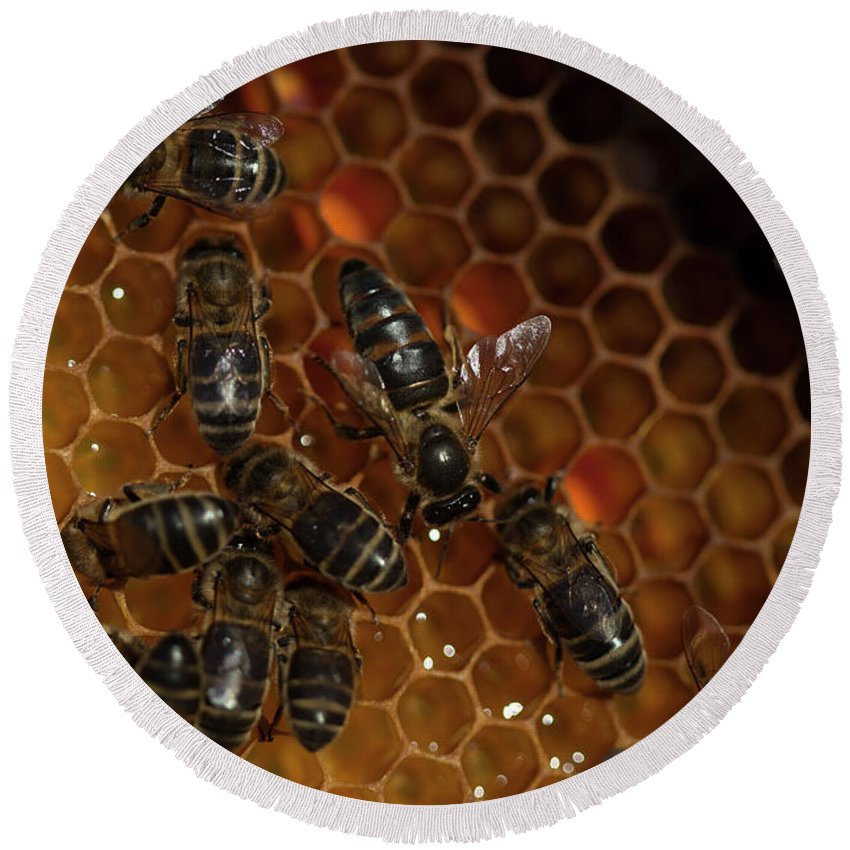 Worker Bees Round Beach Towel featuring the photograph A Queen Bee Walks In The Center by Chico Sanchez