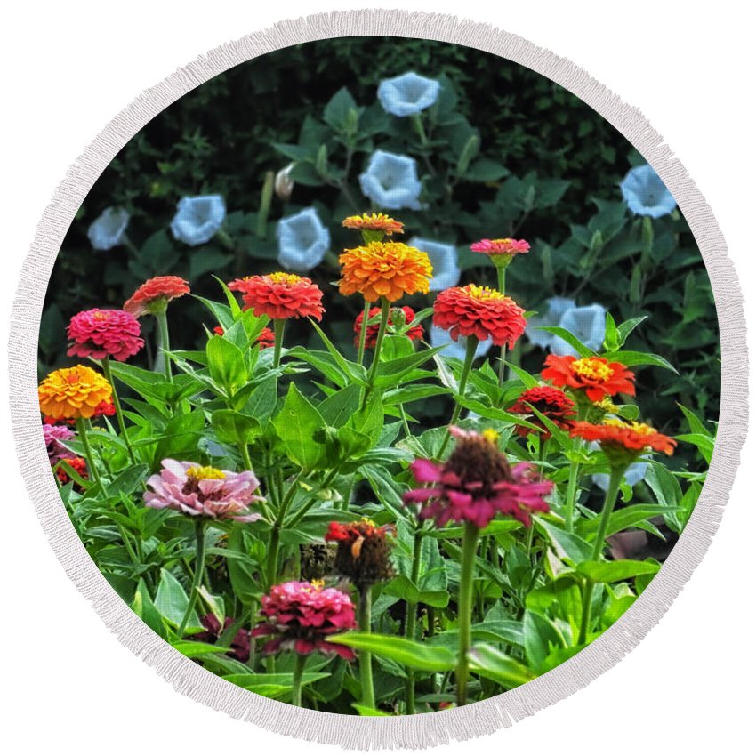 Floral Round Beach Towel featuring the photograph A Sea Of Zinnias 15 by Thomas Woolworth