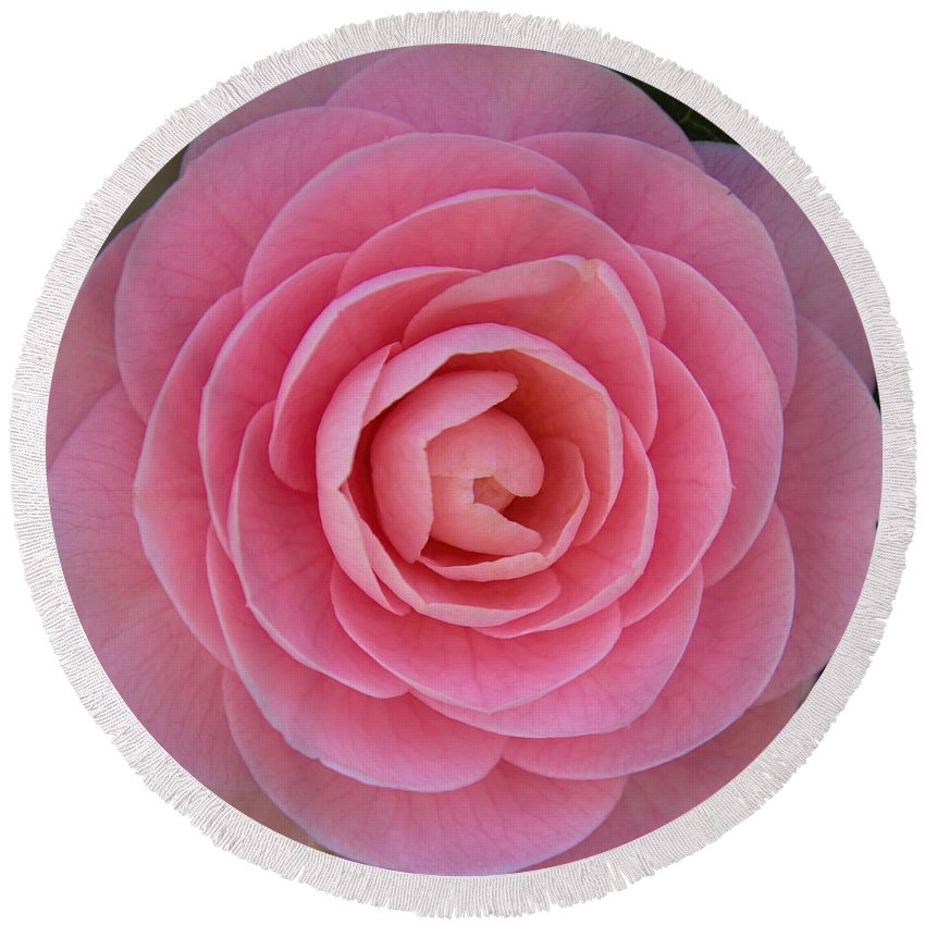 (camellia Sasanqua) Round Beach Towel featuring the photograph A Soft Blush by Jemmy Archer