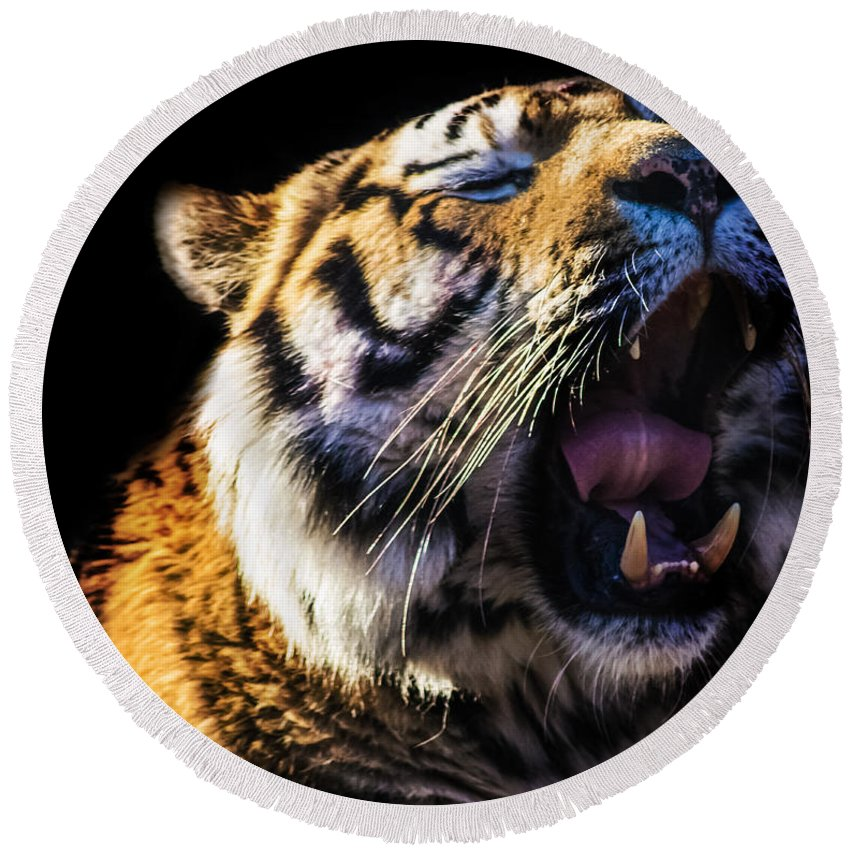 Tiger Round Beach Towel featuring the photograph A Tiger's Roar by Martin Newman