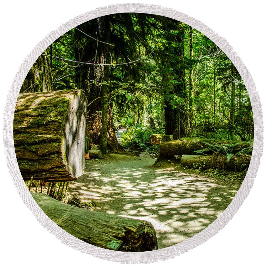 Old Growth Forest Round Beach Towel featuring the photograph A Walk Among The Giants Collection 3 by Roxy Hurtubise