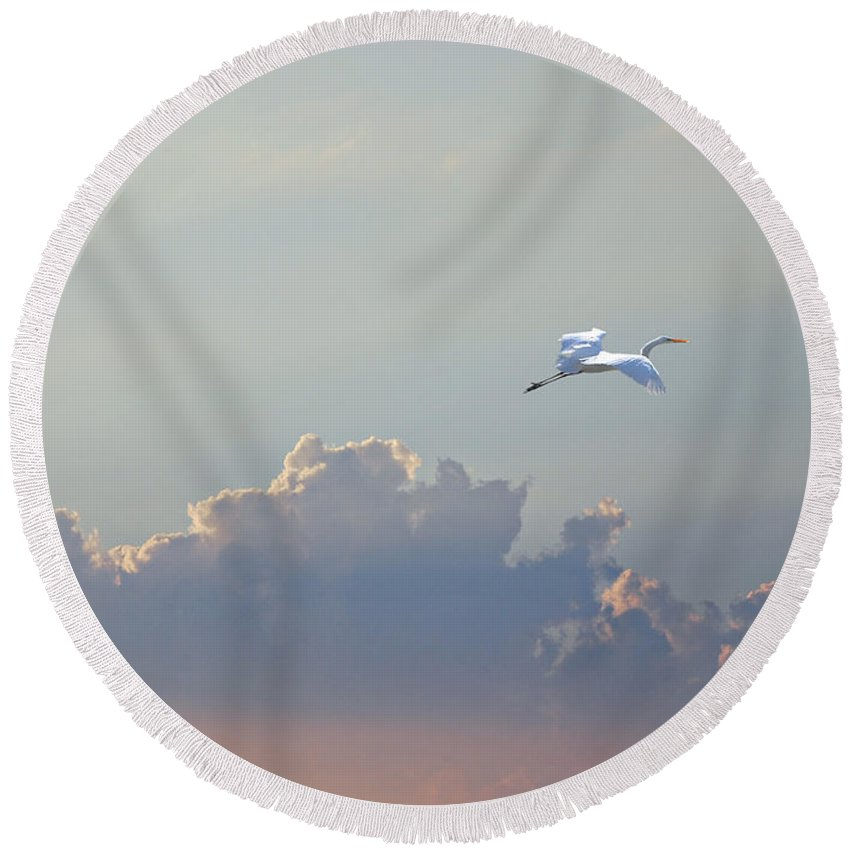 Egret Round Beach Towel featuring the photograph Above It All by Adele Moscaritolo