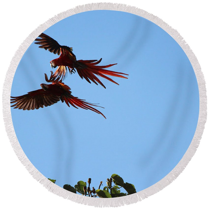 Scarlet Macaws Round Beach Towel featuring the photograph Above The Treetops by Lorraine Baum