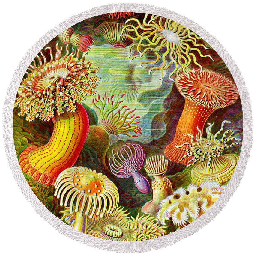 Actinia Sea Creatures Round Beach Towel featuring the digital art Actinia Sea Creatures by Unknown