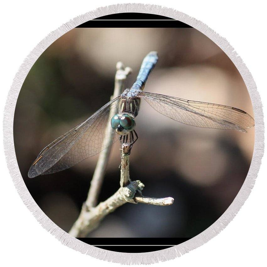 Dragonfly Round Beach Towel featuring the photograph Adorable Dragonfly With Border by Carol Groenen