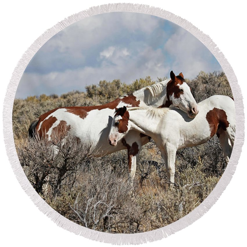 Horses Round Beach Towel featuring the photograph Affection In The Wild by Athena Mckinzie