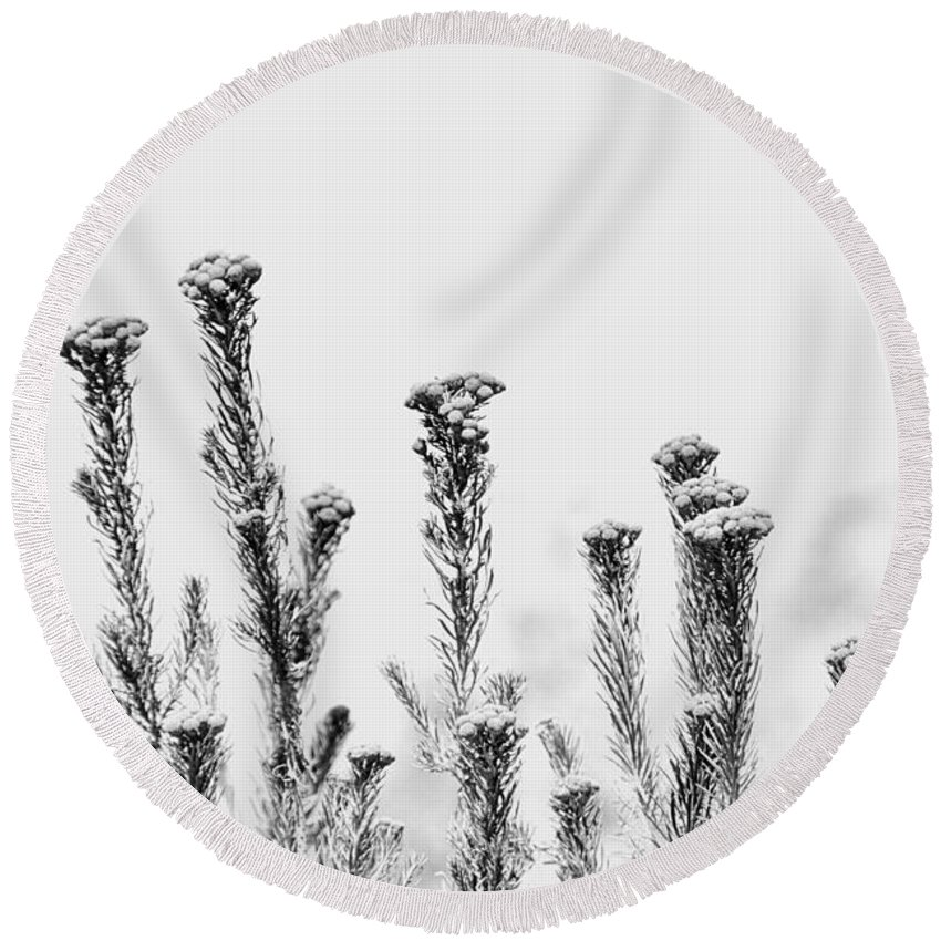 Africa Round Beach Towel featuring the photograph African Bushland-black And White by Douglas Barnard