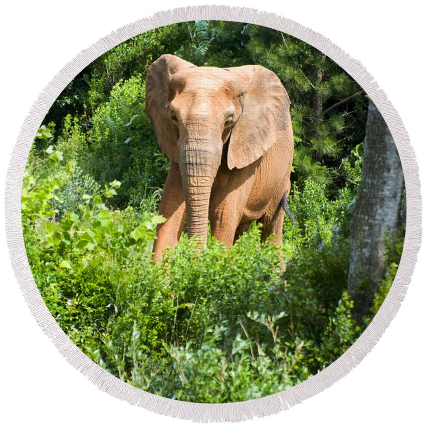 African Elephant Round Beach Towel featuring the digital art African Elephant Coming Through Trees by Chris Flees