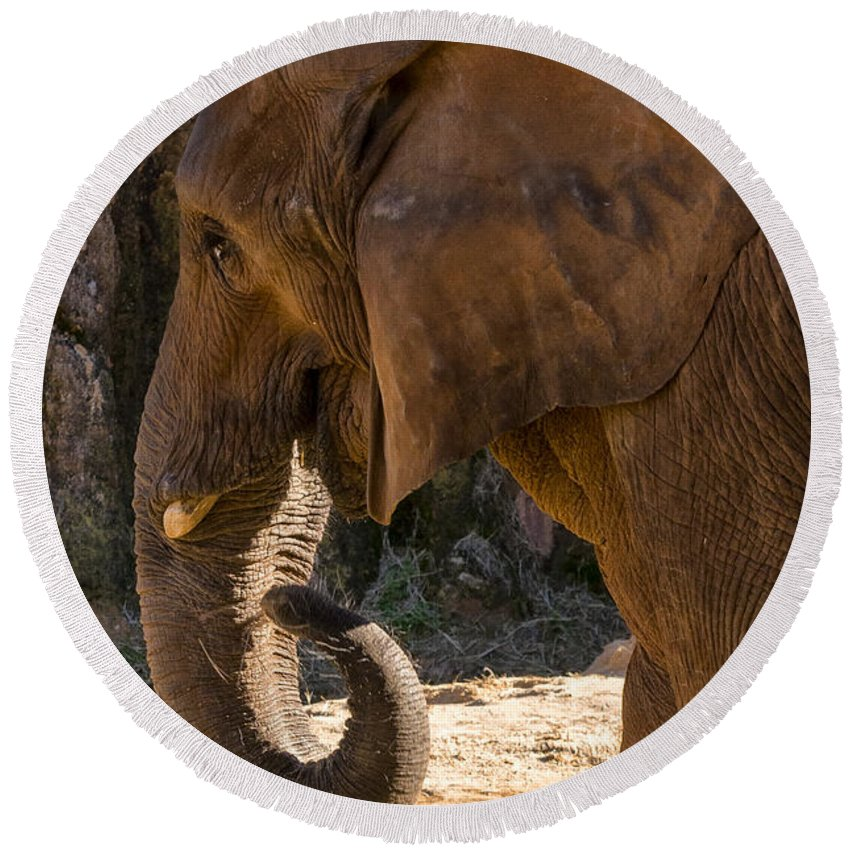 African Elephant Round Beach Towel featuring the digital art African Elephant Profile by Chris Flees