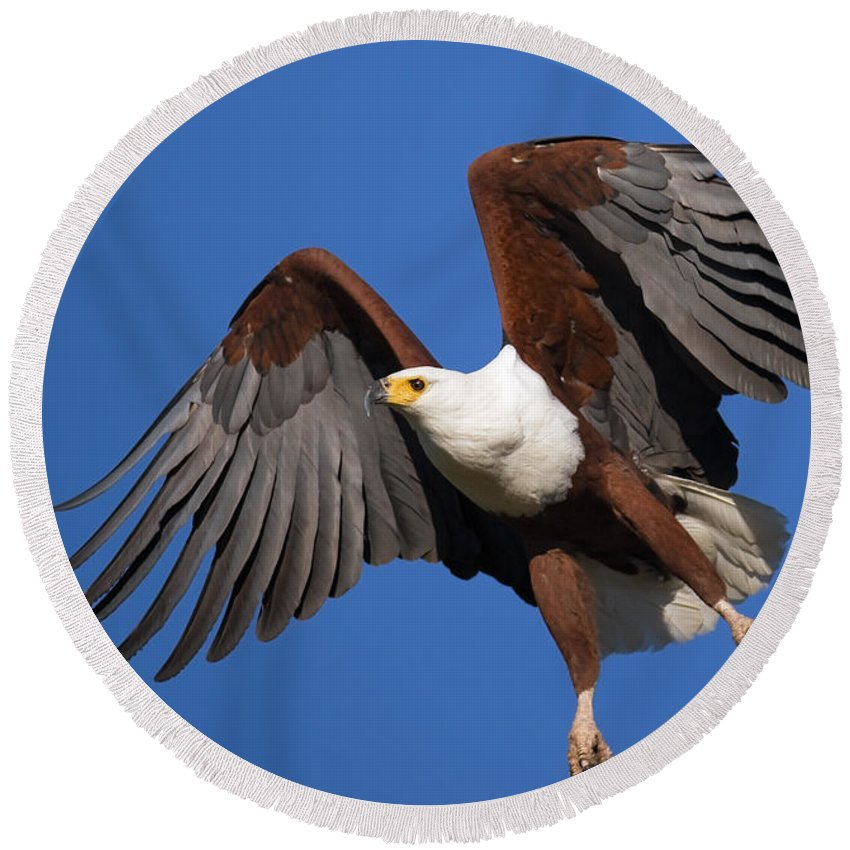 Eagle Round Beach Towel featuring the photograph African Fish Eagle by Johan Swanepoel