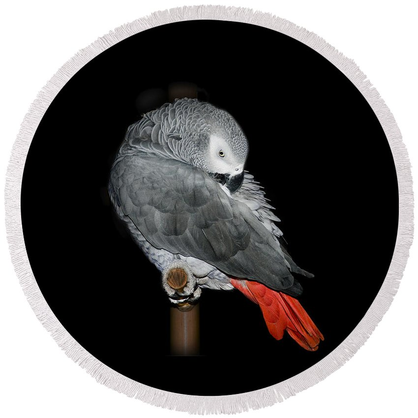 African Gray Parrot Round Beach Towel featuring the photograph African Grey Parrot by Betty LaRue