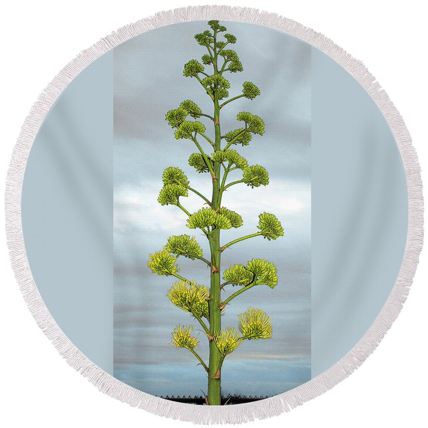 Agave Round Beach Towel featuring the photograph Agave Flower Spike by Ben and Raisa Gertsberg