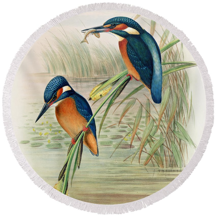 Kingfisher; Birds; Bird; Fish; Colorful; Reeds; River Round Beach Towel featuring the drawing Alcedo Ispida Plate From The Birds Of Great Britain By John Gould by John Gould William Hart