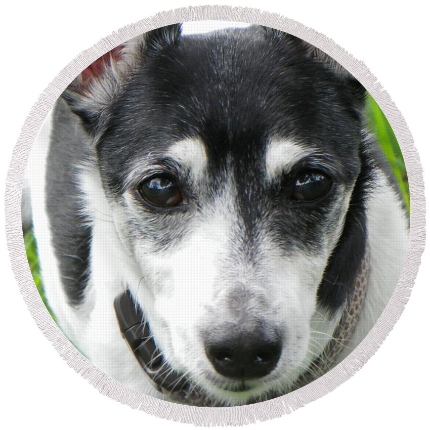 Dog Round Beach Towel featuring the photograph All Ears by Rosalie Scanlon