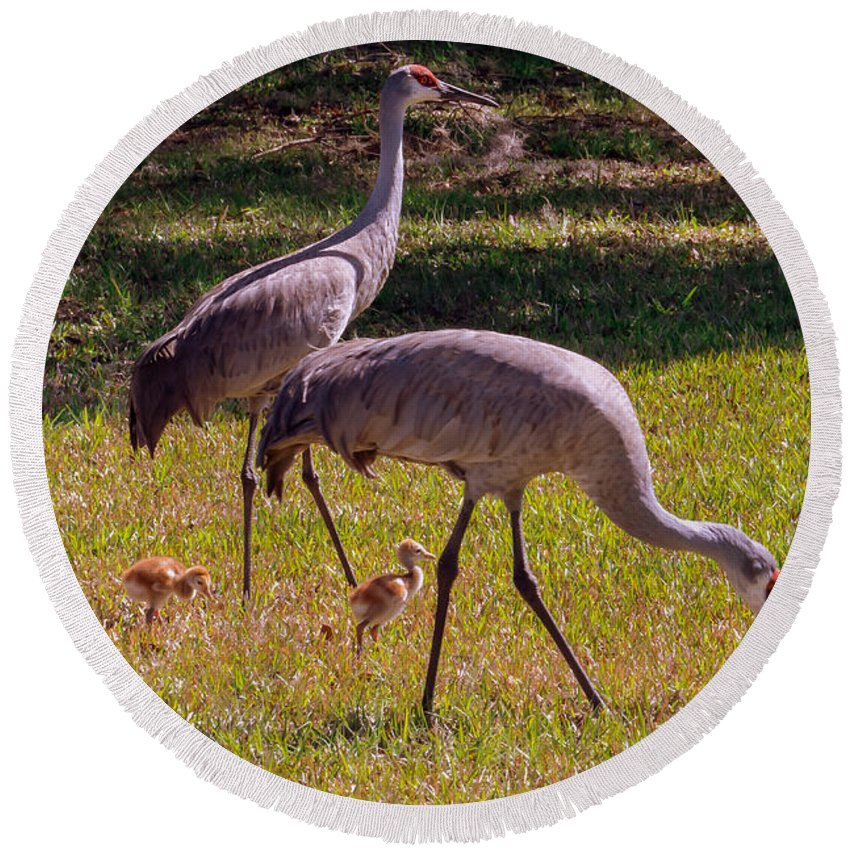 Sandhill Crane Round Beach Towel featuring the photograph All Family by Zina Stromberg