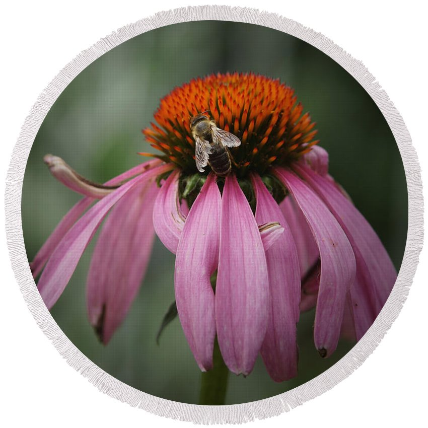 Cone Flowers Round Beach Towel featuring the photograph All Mine by Ernie Echols
