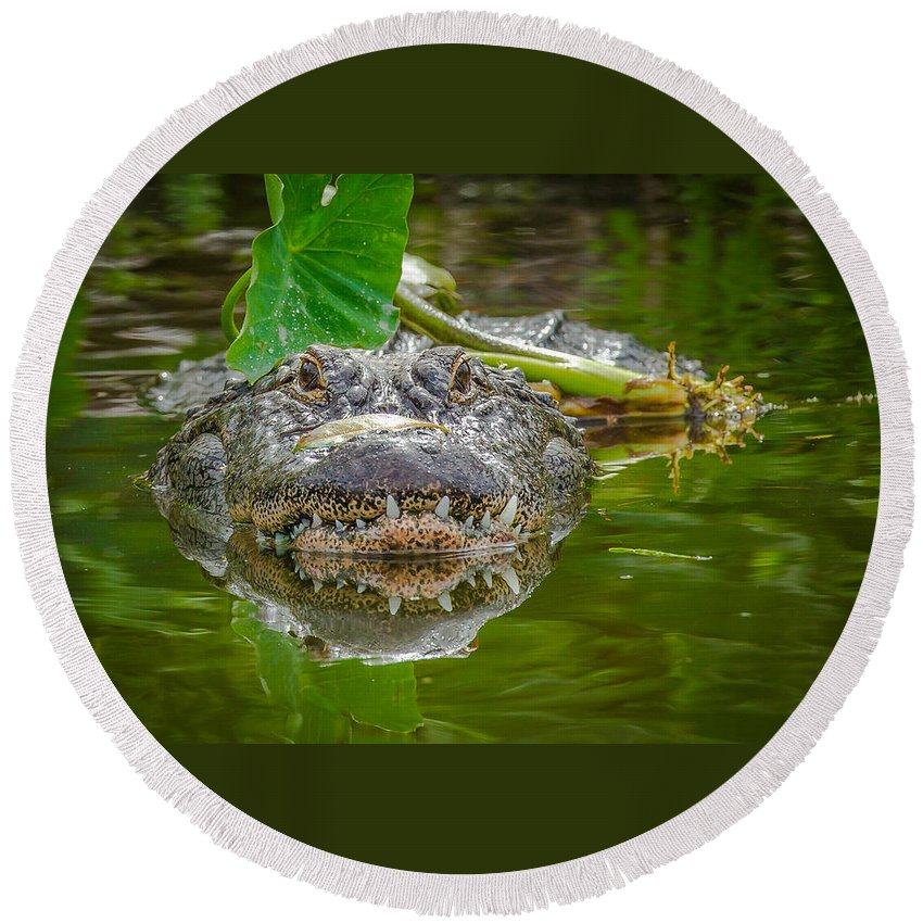Round Beach Towel featuring the photograph Alligator 2 by Dennis Goodman