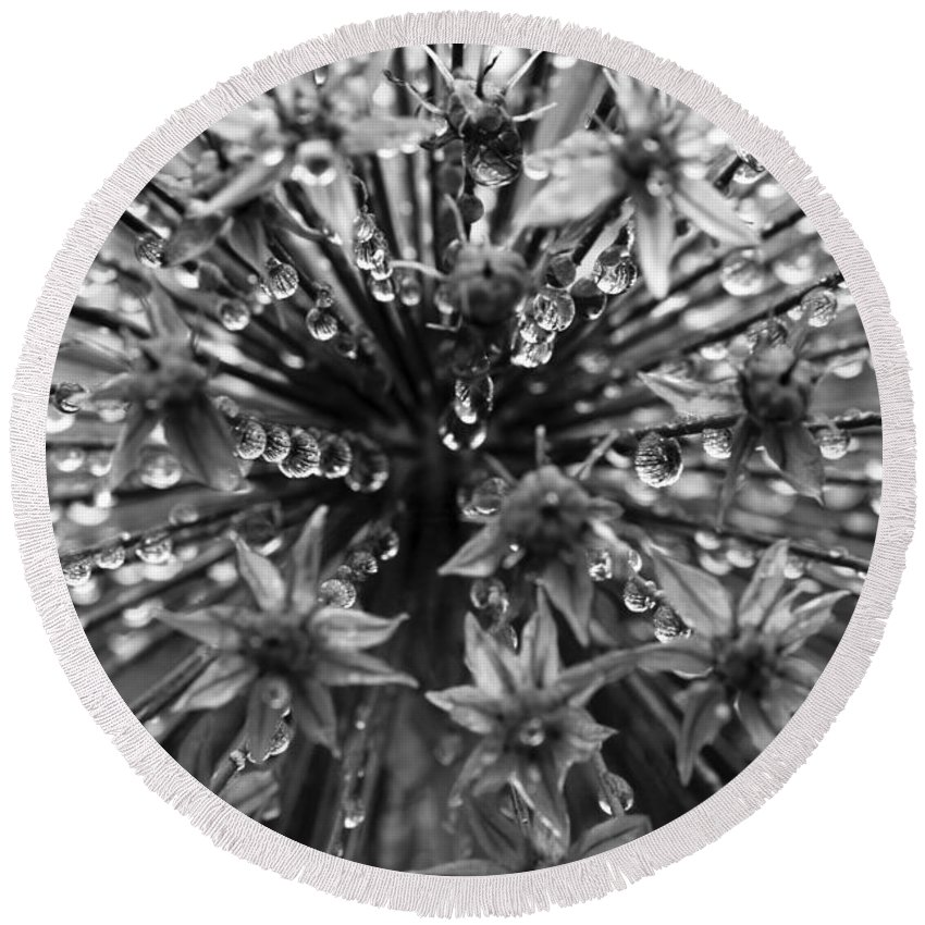 Monochrome Round Beach Towel featuring the photograph Allium Jewels by Anne Gilbert