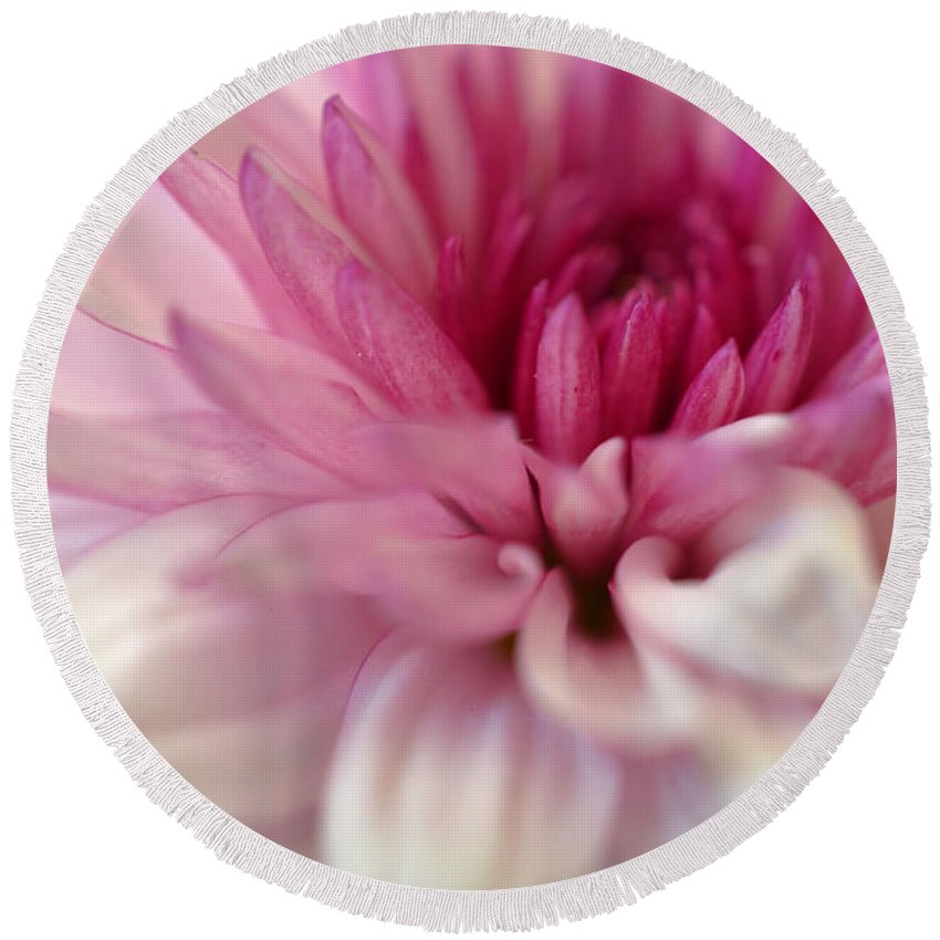 Chrysanthemum Round Beach Towel featuring the photograph Alluring by Deb Halloran
