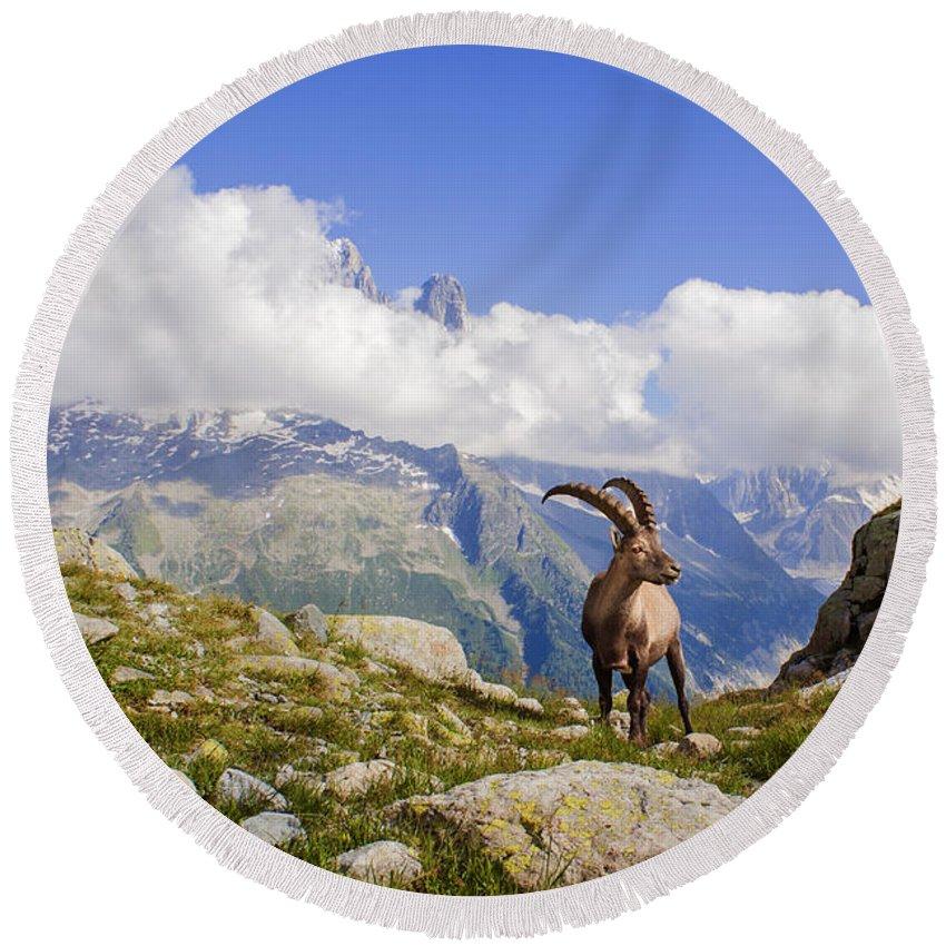 Alpine Ibex Round Beach Towel featuring the photograph Alpine Ibex by Mircea Costina Photography