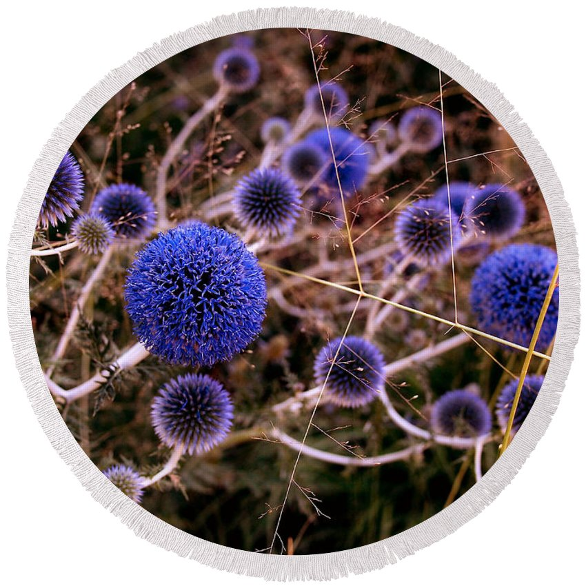 Thistle Round Beach Towel featuring the photograph Alternate Universe by Rona Black