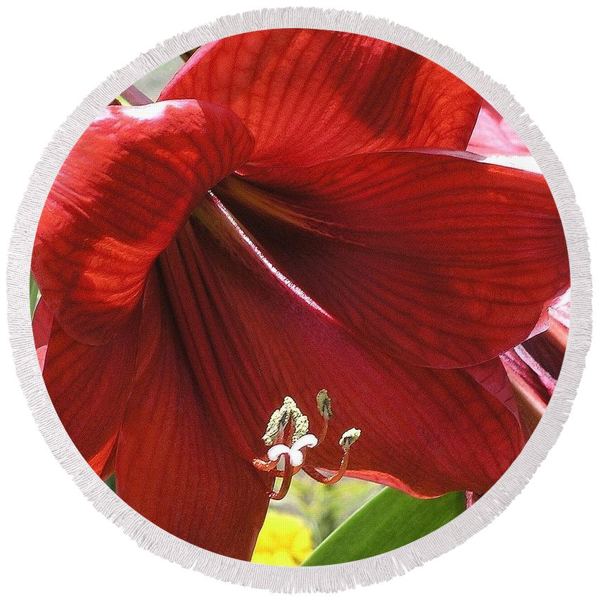 Amaryllis Round Beach Towel featuring the photograph Amaryllis by Mary Deal