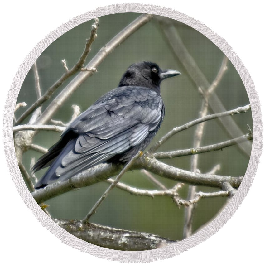 Designs Similar to American Crow by Jim Thompson