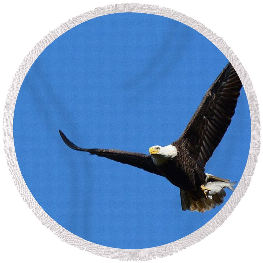 Eagle Round Beach Towel featuring the photograph American Splendor by Cindy Manero