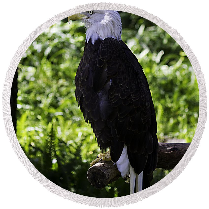 Eagle Round Beach Towel featuring the photograph American Symbol Two by Ken Frischkorn