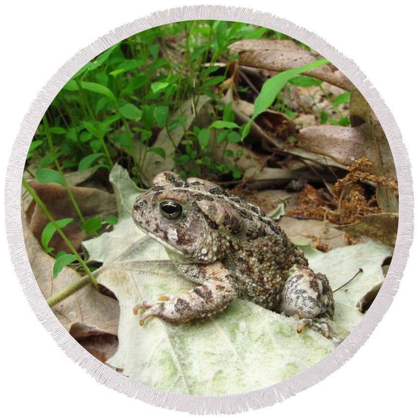 American Toad Photographs Prints Amphibian Photograph Prints Biodiversity Nature Wildlife Forest Ecology Biology Fauna Creatures Round Beach Towel featuring the photograph American Toad by Joshua Bales