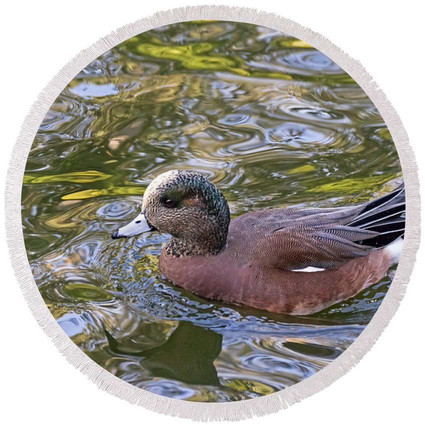 Anas Americana Round Beach Towel featuring the photograph American Wigeon by Kate Brown