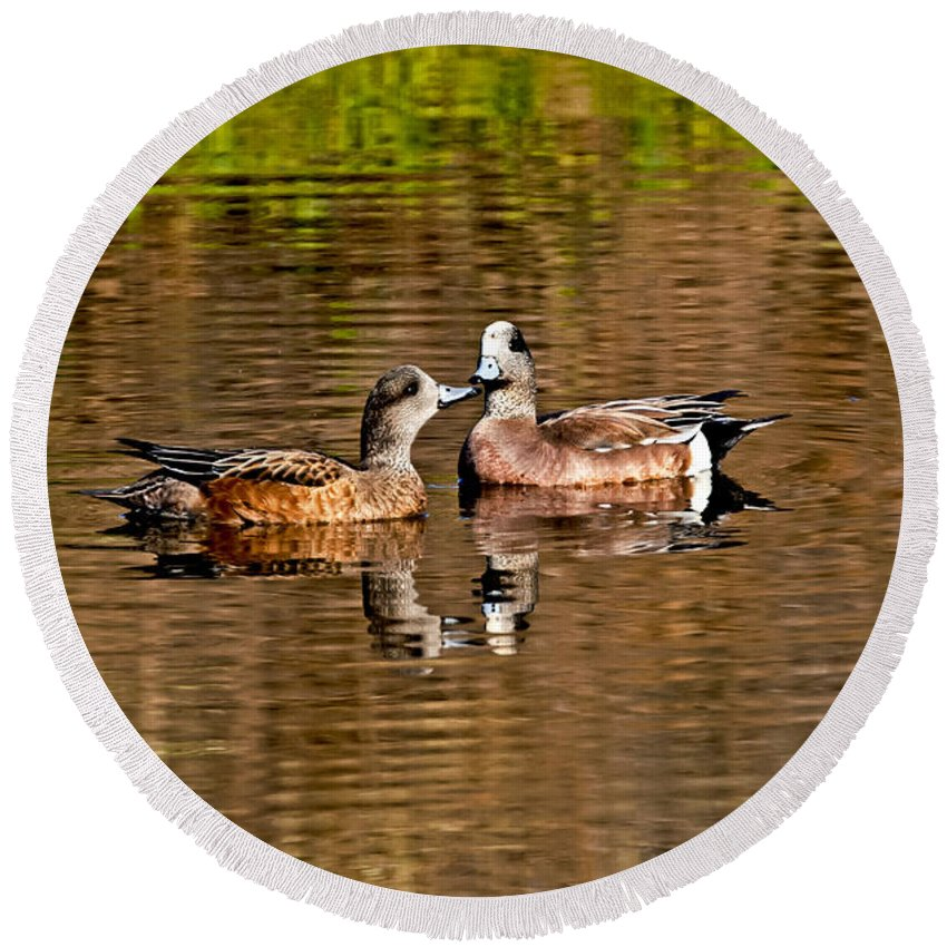 Fauna Round Beach Towel featuring the photograph American Wigeon Pair Together by Anthony Mercieca