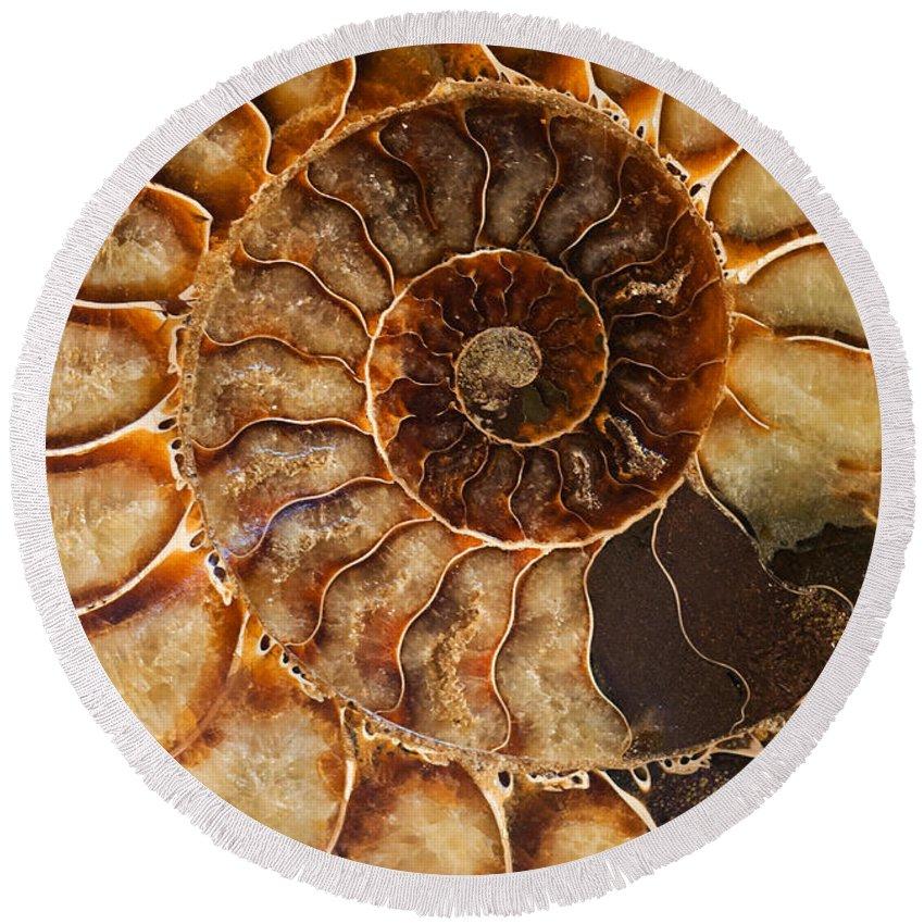 Ammonite Round Beach Towel featuring the photograph An Ancient Treasure II by Jaroslaw Blaminsky
