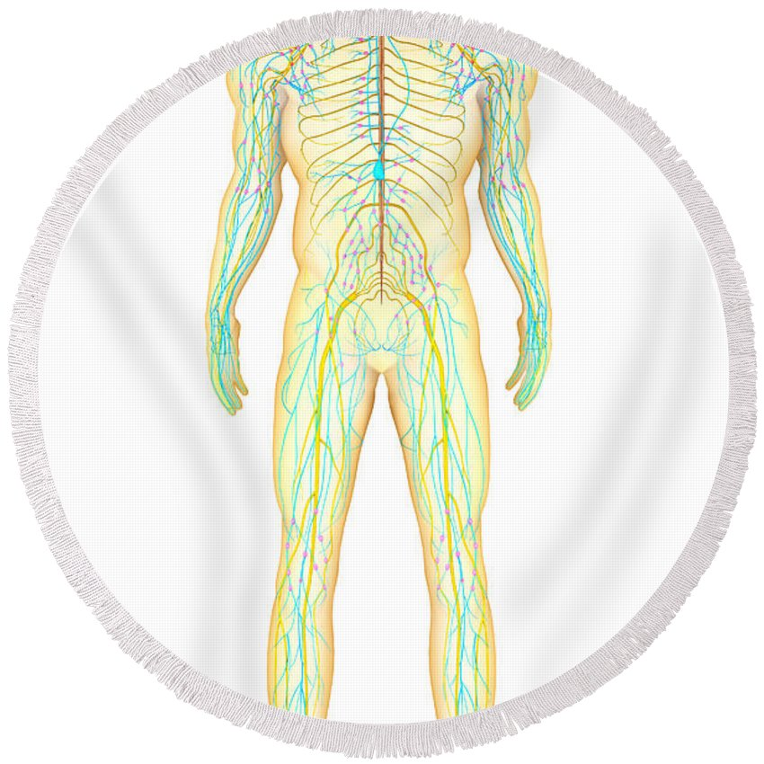 Anatomy Of Human Nervous System Round Beach Towel For Sale By