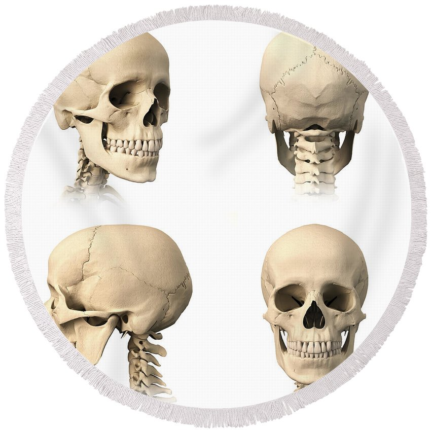Anatomy Of Human Skull From Different Round Beach Towel for Sale by ...